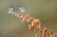 Untitled by adiisnamaulana #nature #photooftheday #amazing #picoftheday
