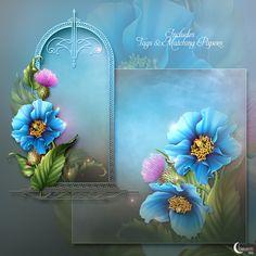 Moonbeam's Himalayan Blue Poppies (FS/CU) [Moonbeam's Himalayan Blue Poppi] - $11.00