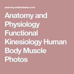 Anatomy and Physiology Functional Kinesiology Human Body Muscle Photos