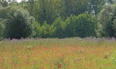 Natural_Park_of_Pelissier-by-Atelier_ARCADIE-08 « Landscape Architecture Works | Landezine beautiful implantation species