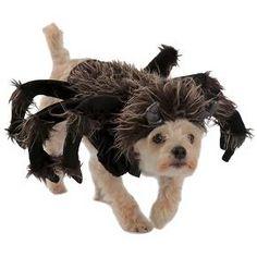 Alice in Wonderland Dog Costume | Halloween Dog Costumes ...