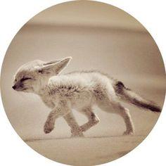 Kangaroo, Animals, Baby Bjorn, Animales, Animaux, Animal, Animais