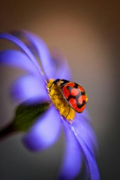 Lady Bug II Photo by Xenia Ivanoff-Erb -- National Geographic Your Shot Beautiful Bugs, Beautiful Flowers, Beautiful Creatures, Animals Beautiful, Photo Animaliere, Flora Und Fauna, A Bug's Life, Bugs And Insects, Tier Fotos