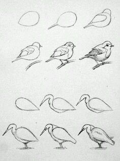 Pencil Drawing Techniques - Learn the easiest ways to draw birds. Step by Step bird drawing tutorial. Pencil Art Drawings, Bird Drawings, Art Drawings Sketches, Easy Drawings, Drawing Birds Easy, Sketches Of Birds, Birds Drawing Images, Easy Animal Drawings, Drawing Lessons