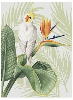 Grace Popp Avian Paradise Ii Canvas Art - 37 x 49 Artist Canvas, Canvas Art, Framed Artwork, Wall Art, Outdoor School, Arte Pop, Prints For Sale, Gustav Klimt, Wassily Kandinsky