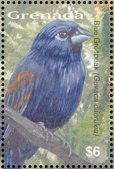 Blue Grosbeak stamps - mainly images - gallery format