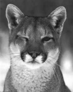 jamao al norte cougars personals Hook up with passionate individuals | flirting dating zjadultdatingvihtwpnyus muslim single men in frenchmans bayou bernville lesbian singles.