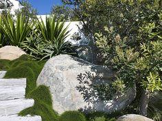 Cousin it & Banksia integrifolia