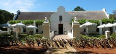 Vergenoegd Winery in Cape Town, South Africa. They use ducks as a natural and earth friendly form of pesticide. Runner Ducks, South African Wine, Caribbean Homes, Le Cap, Travel News, Day Tours, Cape Town, Wine Tasting, Natural