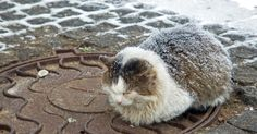 On Animal Webaction, clicks are free and help protect abandoned animals against the cold weather.
