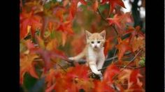 Herfst, herfst wat heb je te koop.
