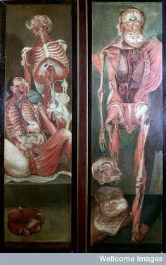 Two anatomical oil paintings by Jacques Fabien Gautier d'Agoty, 1764-1765. Left: Two dissected male figures, one seated, the other standing behind, with viscera on the floor in the foreground. Right: A standing dissected man, posterior view, with separate sections of the brain