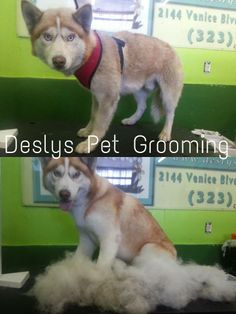 #petlovers #grooming #doggrooming #catgrooming #dog #poochie #pet #love #rescue #newlook #cleandog #cleanpooch #cleanpet #healthypet #healthyfriend #bestfriend #buddy #poochlove #pets #woof #paw #pet #deslyspetgrooming #petspa #doglovers #animallovers #birds #cat #catgrooming #birdgrooming #parrots #groomingdiscounts #petnail #petidtag #petstore #petsupplies #petmerchandise #petnews #petinfo #petretail #petboutique #birdfood #birdcage #westLA #Westhollywood #hollywood #losangeles #EastLA