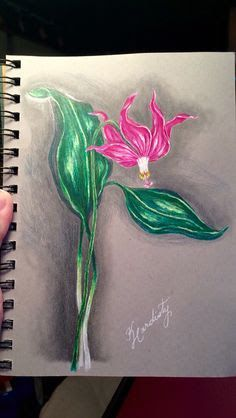 katie pie drawing - Google Search