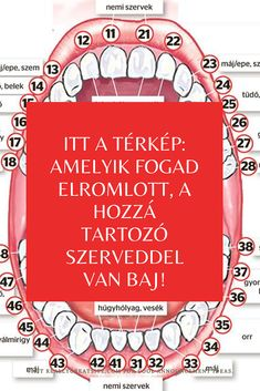 Itt a térkép: amelyik fogad elromlott, a hozzá tartozó szerveddel van baj! Health Tips, Health Care, Dental Office Design, 30 Minute Workout, Ayurveda, Healthy Life, The Cure, Massage, Beauty Hacks