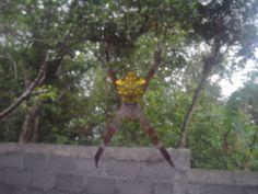 A wild Spider