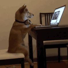 Dog sits comfortably like a human. [video] [Rumble Viral]