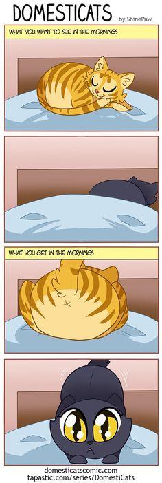DomestiCats :: Mornings   Tapastic Comics - image 1