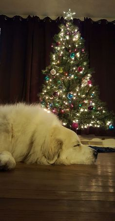 A Pyrenean Christmas | 2017 - It's Dog or Nothing