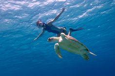 #snorkeling#turtles#Oceana