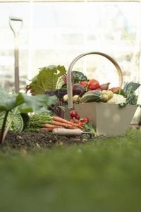 Vegetable Gardening for Beginners: Advice on plot size, which vegetables to grow, and other vegetable garden planning tips from The Old Farmer's Almanac. for beginners arizona Vegetable Gardening for Beginners Vegetable Garden For Beginners, Starting A Vegetable Garden, Gardening For Beginners, Vegetable Gardening, Gardening Tips, Fall Vegetables, Planting Vegetables, Growing Vegetables, Dehydrated Vegetables