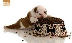 Via Google+ Você sabia? #Cães também tem #diabetes. Veja: https://plus.google.com/u/0/b/109734339054998774402/109734339054998774402/posts/Lo5j1pNAVLE