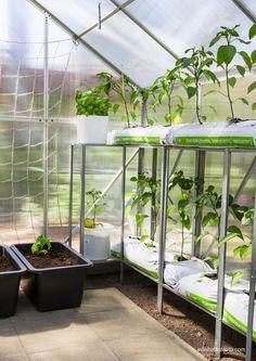 Villa Hottentotti: Kasvihuoneen kesäasukit