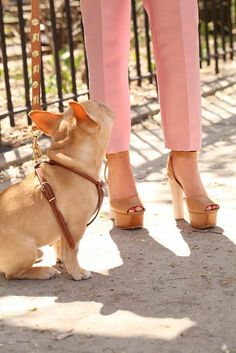 puppy and platforms