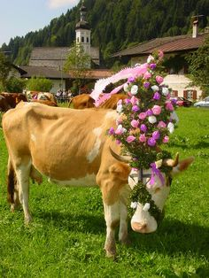 CONCOURS DE VACHE DECOREE Almabtrieb Festival in Sachrang -Germany will take place on Sept. 14, 2013