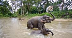 Karnataka Wildlife Safari Tour- 12N/13 Days Travel Package Karnataka Angkor, Chiang Mai, Butterfly Park, Vietnam Voyage, Real Nature, Thailand, Wildlife Safari, Viewing Wildlife, Photography Tours