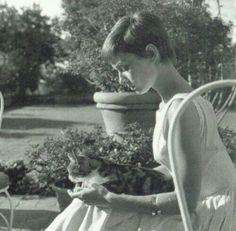 1954 - Audrey Hepburn with a cat...