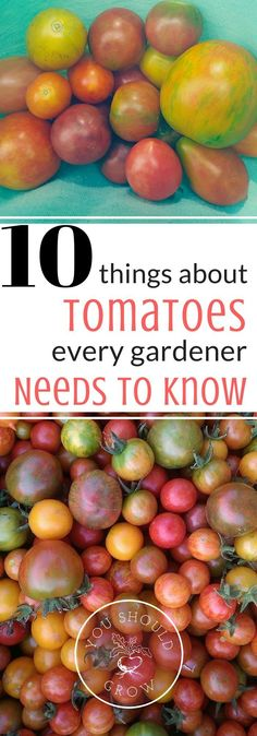 Tomatoes are great to grow in the home garden. If you want to grow the best tomatoes in your garden, then you need to know these 10 things.  via @whippoorwillgar