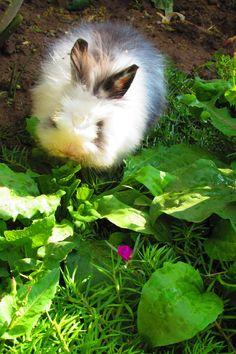 Los conejos también despierta al sentir los rayos del son, pero tranquilos que la flor no esta en su dieta!!!