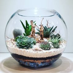 This striking and sculptural terrarium contains cacti, succulents, airplants, chunks of feature stone, pebbles and sand. Suggested additions: transform your terrarium from living decor to mini land… Mini Cactus Garden, Succulent Gardening, Cactus Flower, Succulents Garden, Plants In Glass Bowl, Plants In Jars, Glass Cactus, Cactus Terrarium, Pot Jardin
