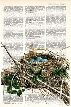 (1) Gallery.ru / Foto # 1 - los pájaros y jaulas - Axnadi