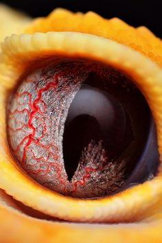 Snake Eyes|Gid Ferrer