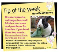 beware of feeding your rabbit gassy greens, bunny, rabbit, rabbit diet Rabbit Toys, Pet Rabbit, Rabbit Treats, Funny Rabbit, Baby Bunnies, Cute Bunny, Pet Bunny Rabbits, Adorable Bunnies, Bunny Care Tips