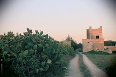 #Country #paths in #Apulia.