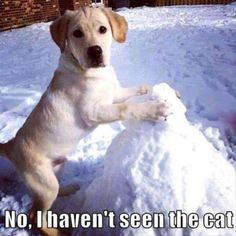 Funny Dog Buries Cat In Snow
