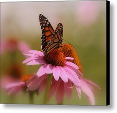Easy Landing Canvas Print / Canvas Art by Kay Novy