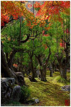 Shozan Garden, しょうざんリゾート  Damien Douxchamps' Photography -
