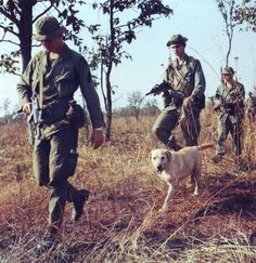 A combat tracker team from the 4th Infantry Detachment (War Dog Provisional), heads out on the trail of the fleeing enemy, February 1969.