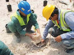 The mangroves located near the New Doha Port, which is under construction south of the city, are under permanent watch to avoid environmental impact, the company in charge of the project has said