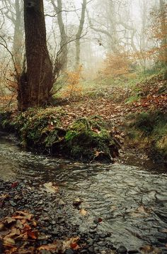 stream. by £thomas.c.w, via Flickr