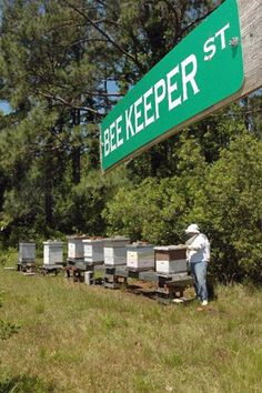 Beginning beekeepers have plenty of company and great advice from our beekeeping bloggers who've been there and cah help you with shortcuts and wise advice. - From MOTHER EARTH NEWS