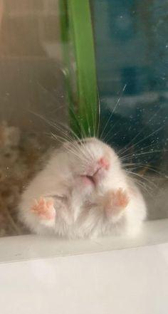 Funny Rats, Funny Hamsters, Cute Rats, Funny Cute Cats, Cute Funny Animals, Baby Animals Super Cute, Cute Wild Animals, Cute Baby Dogs, Cute Little Animals