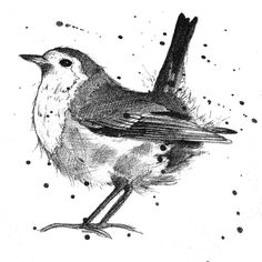 Robin sketch http://michellecampbellart.com