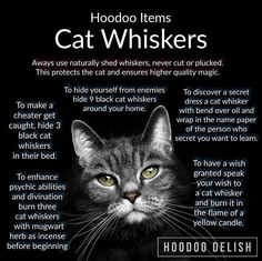 Cat whiskers ritual uses