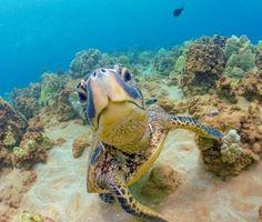 Sea Turtle hates paparazzi