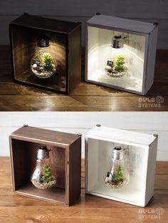 Dose, Glühlampe Sukkulente 1 (Puni) - All For Garden House Plants Decor, Plant Decor, Diy Home Crafts, Diy Home Decor, Light Bulb Crafts, Terrarium Diy, Terrarium Wedding, Terrariums, Ideias Diy